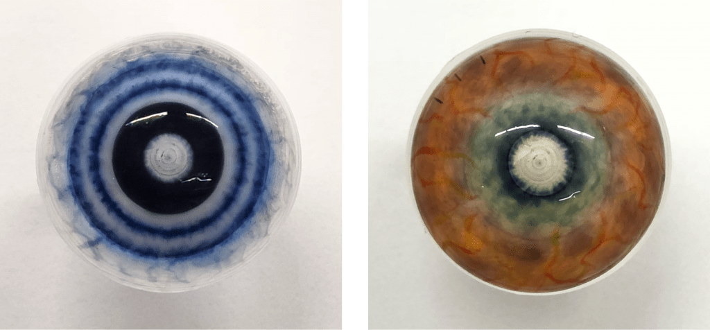 Hand painted lenses by Cantor and Nissel